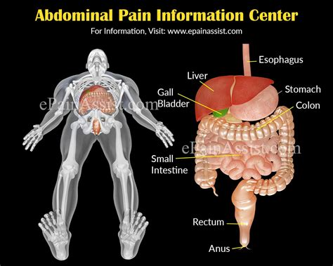 lower right side abdominal pain after c section abdominal pain stomach ache information center abdominal