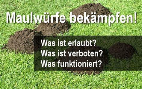 Was Tun Gegen Maulwurf 2637 by Mittel Gegen Maulwrfe Finest Maulwurf With Mittel Gegen