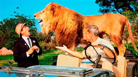 film lion qui parlent clarence le lion qui louchait film 1965 senscritique