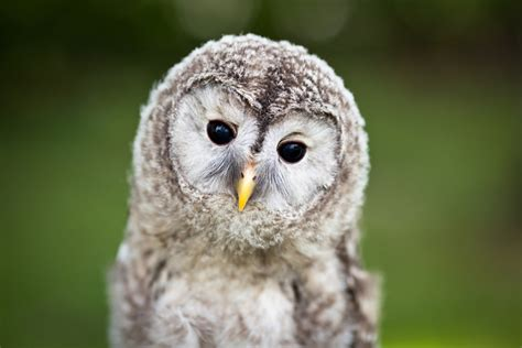 what do you call a baby owl and other baby animals