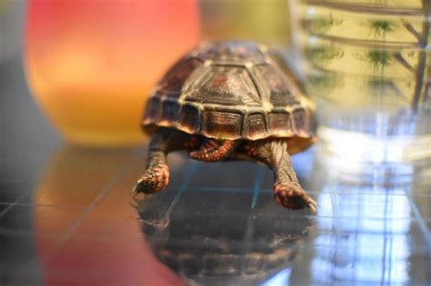 Turtle From Creature Comforts by 43 Best Images About Turtles And Tortoises On