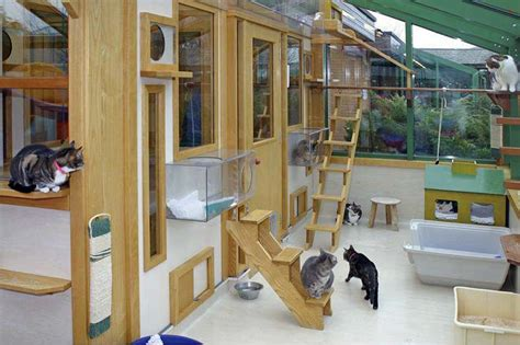 cat room finding a cattery that suits you and your cat the tiger