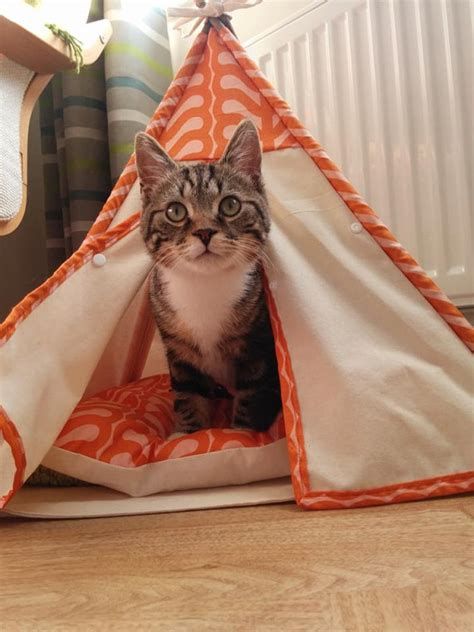 Handmade Cat Bed - custom handmade cat teepee bed by lovelylunacrafts on etsy