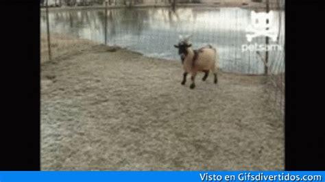 imagenes gif animadas chistosas 30 im 225 genes y gifs chistosos para whatsapp imagenes