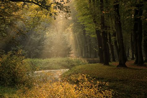 fairy tale forest paul beentjes flickr