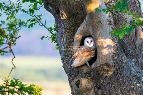 welcome to my home the whitby barn owl whitby photography