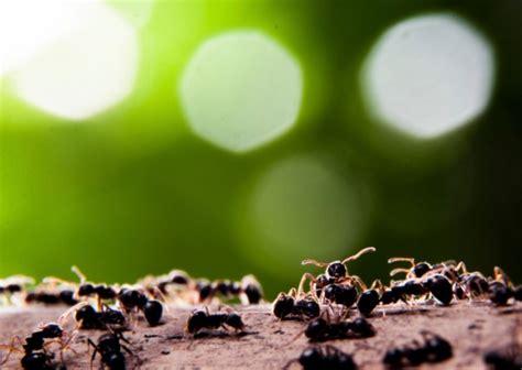 invasione di formiche in cucina come tenere lontano dalla cucina le formiche come fare tutto
