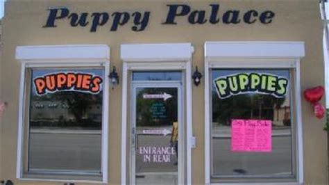 puppy palace fl puppy palace inc fl 33021 business listings directory powered by