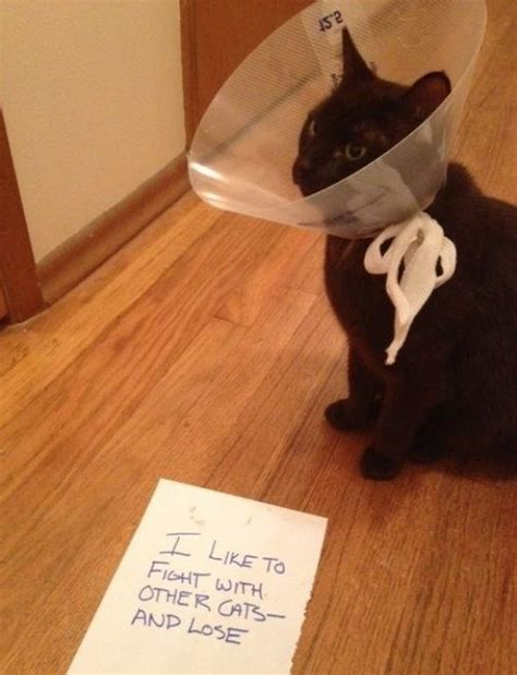 Cone Of Shame Meme - bad loser quotes quotesgram