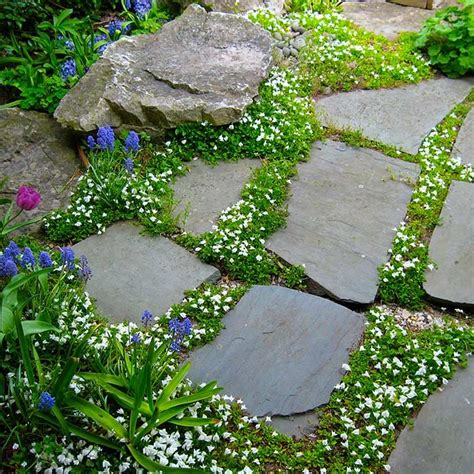 backyard ground cover ideas 19 best groundcovers images on garden ideas