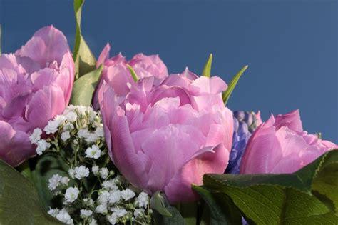 fiori recisi fiori recisi le domande pi 249 comuni garden arcobaleno
