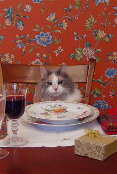 cat dinner cats as dinner guests worms germs
