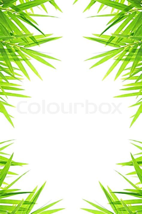 Flower Decoration For Home by Green Bamboo Leafs Border Design Stock Photo Colourbox