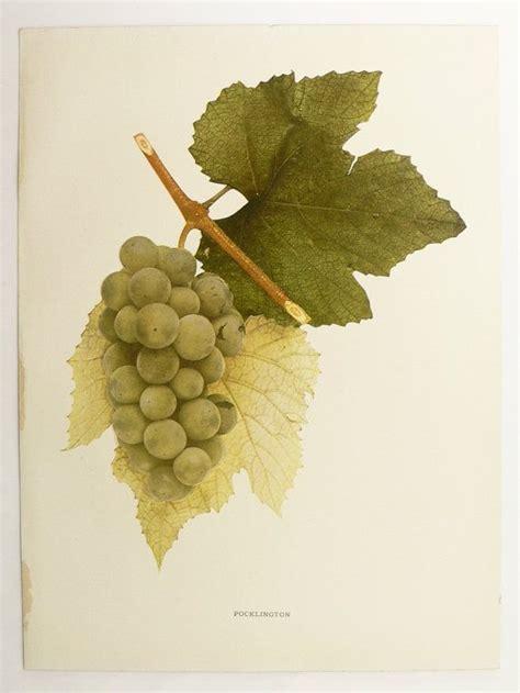 fruit e bars vine 49 best grapes images on wine cellars murals