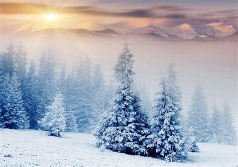 snow trees winter mountains  full wall mural photo