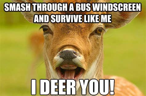Deer Memes - pet deer memes