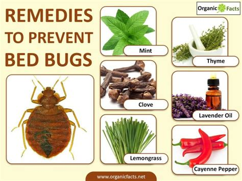 prevent bed bugs 12 surprising home remedies to prevent bed bugs organic