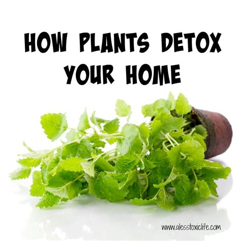 How To Detox Your At Home by How Plants Detox Your Home
