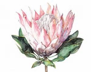 Ceramic Flower Vase Flower Bouquets Clipart Forever King Protea Gumtree