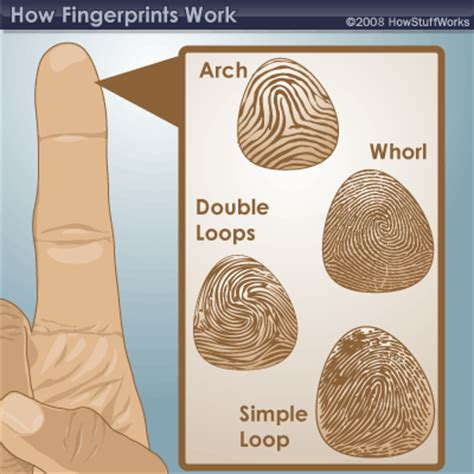 Finger Print Background Check What Are Fingerprints What Are Fingerprints Howstuffworks