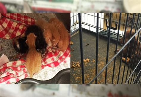 huddle house indianola ms shocking indianola animal shelter failing animals in mississippi