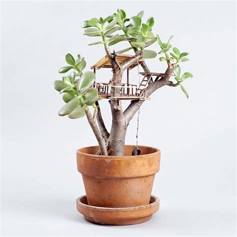 miniature indoor plants cute miniature treehouses for house plants memolition