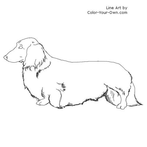 weiner dog coloring page longhaired dachshund dog coloring page
