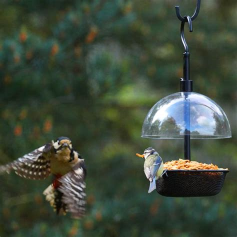 customer reviews  chapelwood squirrel dome  bird