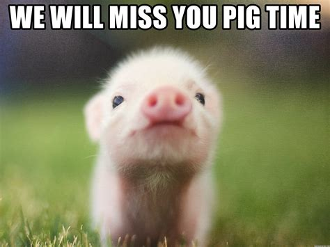 I Will Miss You Meme - we will miss you pig time tax pig meme generator