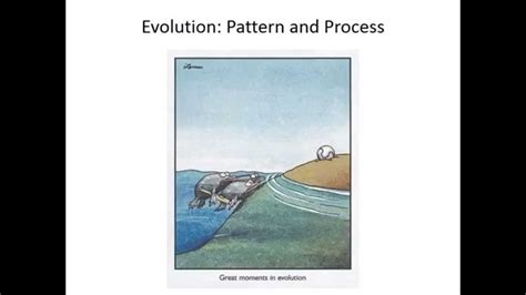 Pattern Of Evolution Quizlet | ecology and evolution quizlet