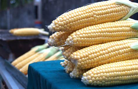 Panggangan Jagung cara memanggang jagung tipsrumah