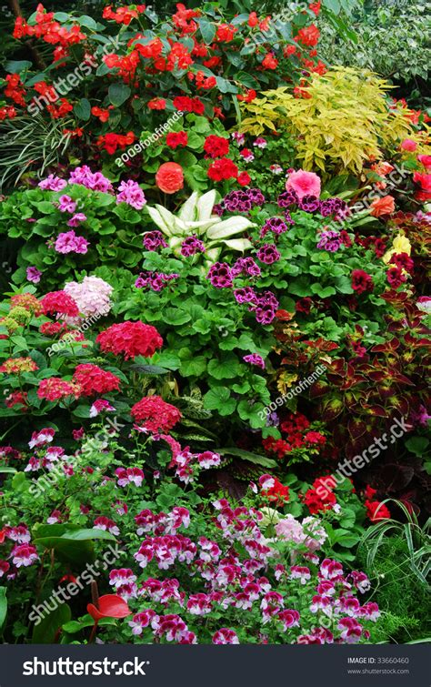 new year flowers vancouver flowers historic butchart gardens 100 stock photo