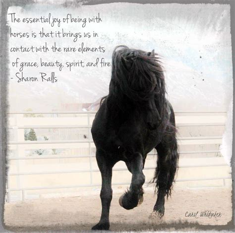 quotes about horses royal grove stables inspirational quotes
