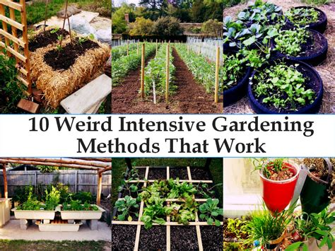 10 Wacky Tips That Actually Work by 10 Intensive Gardening Methods That Really Work