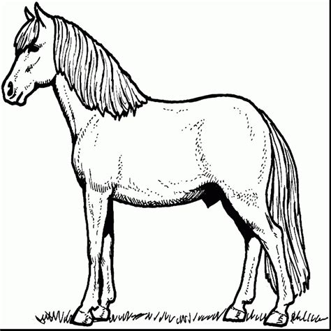 welsh pony coloring pages carousel animals coloring pages horses page free printable