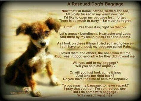 dogs prayer a rescue dogs prayer starsky