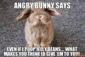 Angry Bunny Meme - angry bunny memes