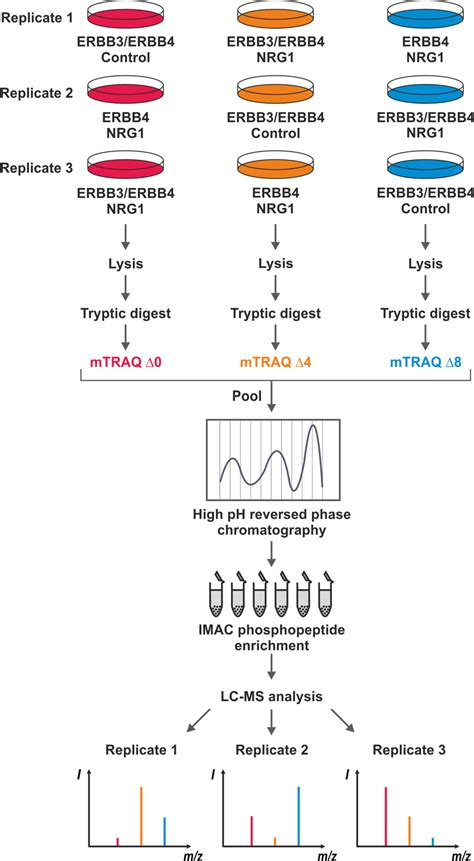 pattern classification and experiment design quantitative phosphoproteomics workflow and experimental