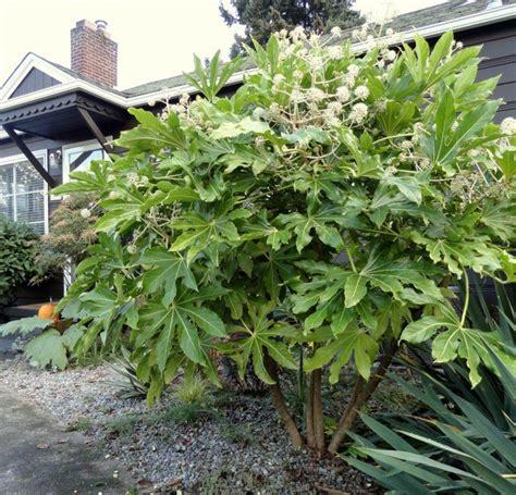 winterharte pflanzen für den garten 5 32 best ideas about pflanzen on agaves deko