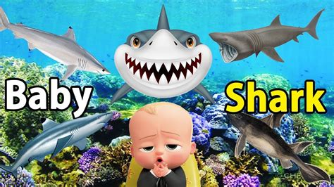 baby shark dance kid learning best kid learning video toddlers learn