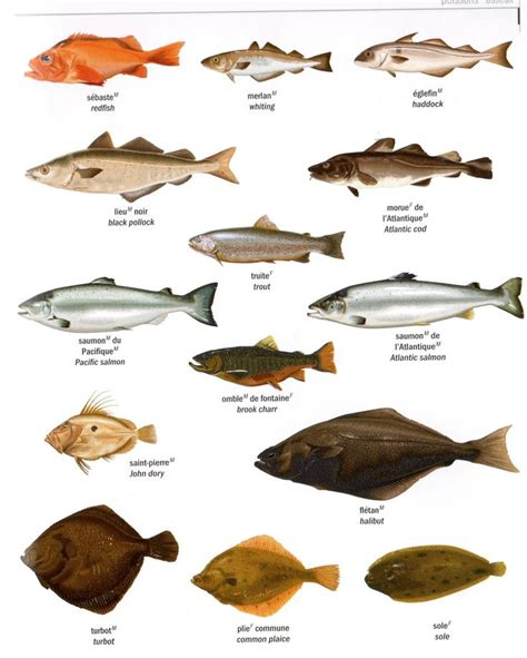languages online french section 33 fle learning french fish poissons p2 source