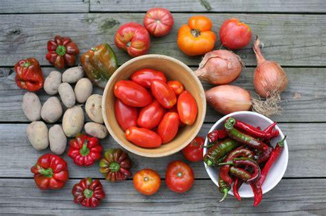 wann muss tomaten sã en tomate anbau und kultur im freiland plantura