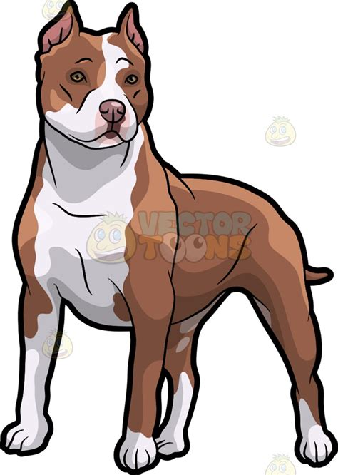 how to a pitbull to be a guard a pit bull on guard clipart vector