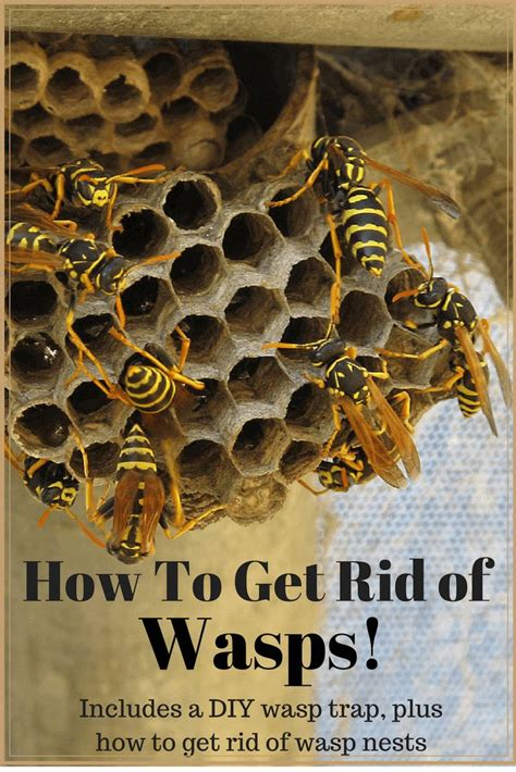 how to get rid of bees in my backyard 25 best ideas about bee repellent on pinterest natural