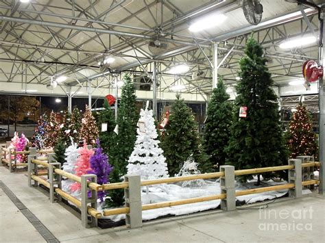 christmas trees for sale close to home artificial trees for sale photograph by renee trenholm