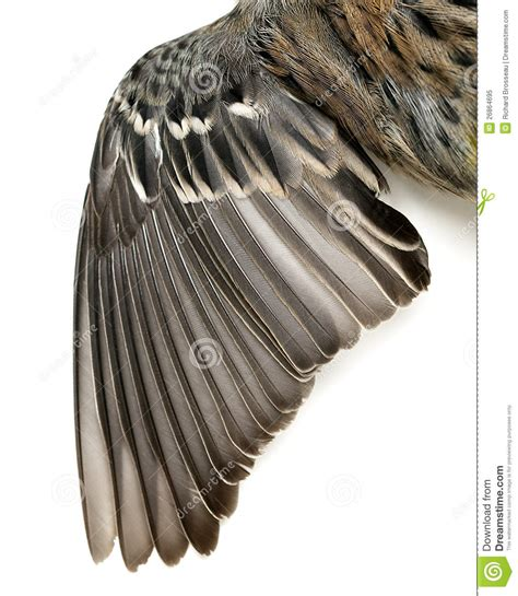 bird wing feathers royalty free stock photo image 26864695