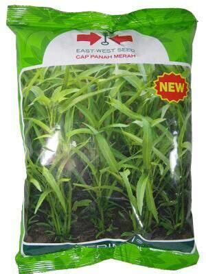 Daun Afrika 1 Kg jual benih kangkung daun runcing serimpi 1 kg dadi makmur