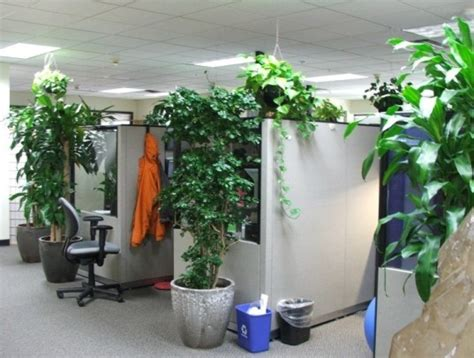 good office plants 9 low maintenance plants for the office inhabitat
