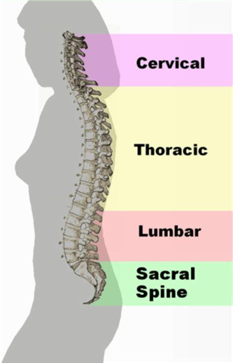 back pain wikipedia