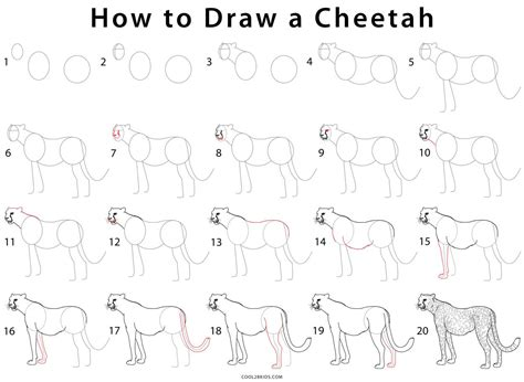 how to draw with you doodle how to draw cheetahs cheetah pencil and in color